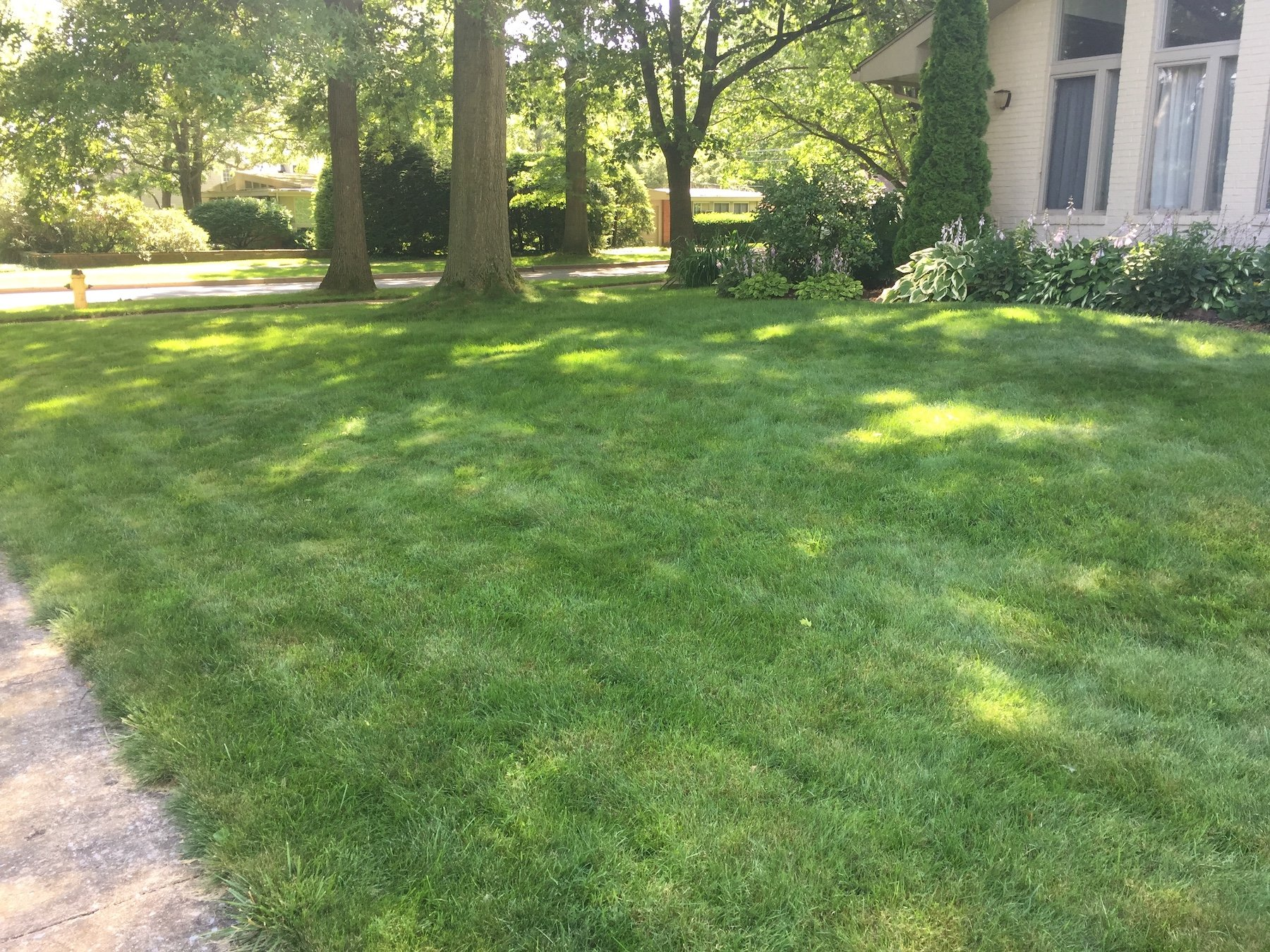 Fine fescue lawn in shade-penn state