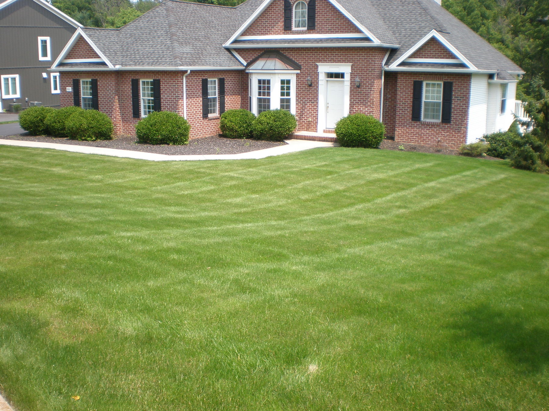 Kentucky bluegrass lawn-penn state