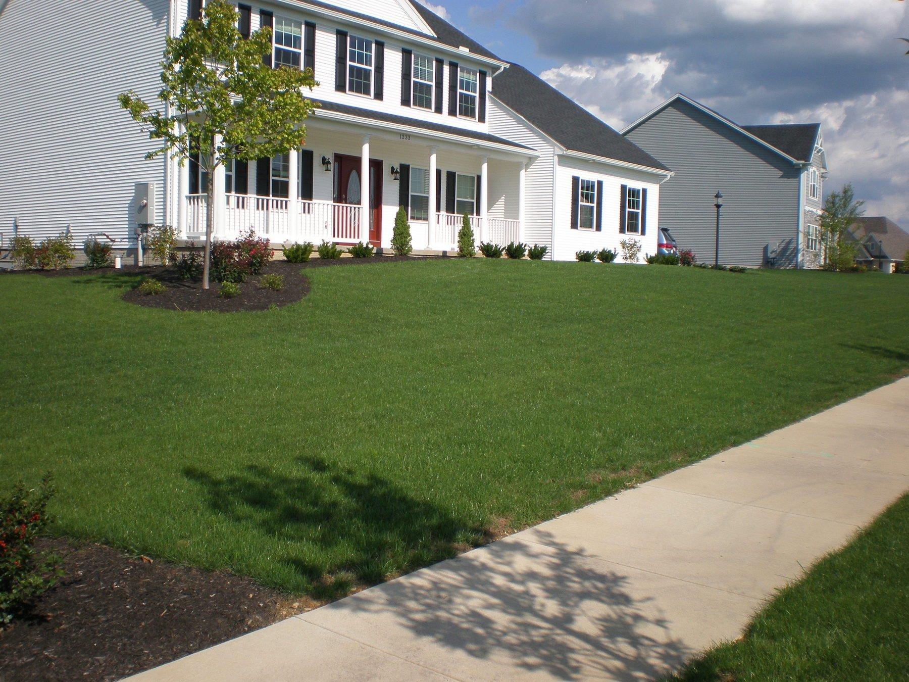 Perennial ryegrass lawn-penn state