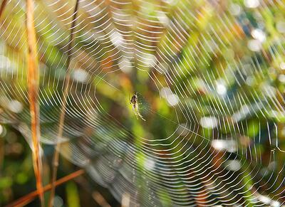 Spider web to be cleaned by pest control services