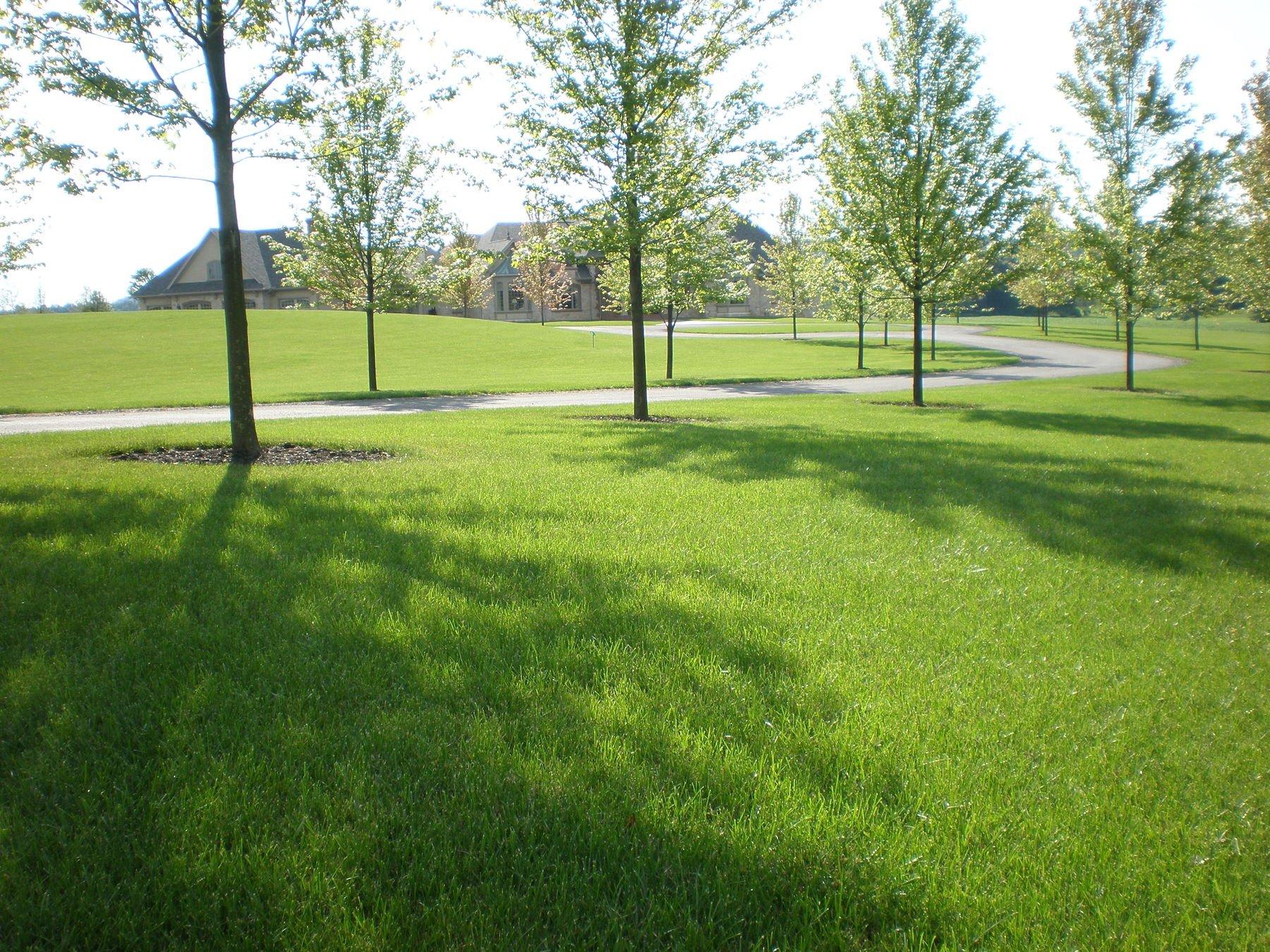 Tall fescue lawn-penn state