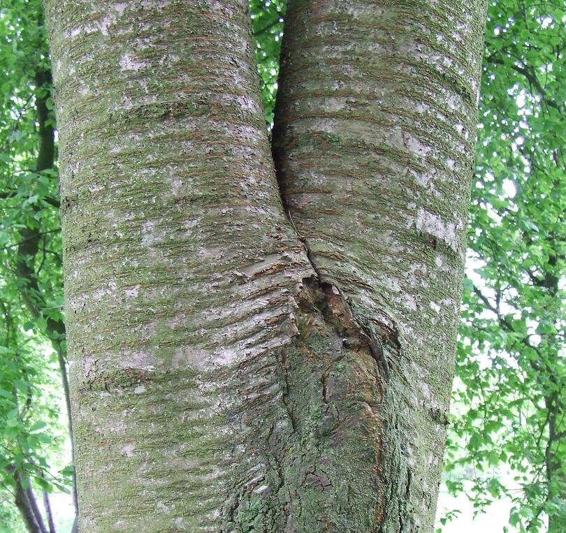 How to tell if a tree is dangerous and how a tree inspection can spot hazards.