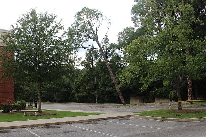 leaning tree.jpg