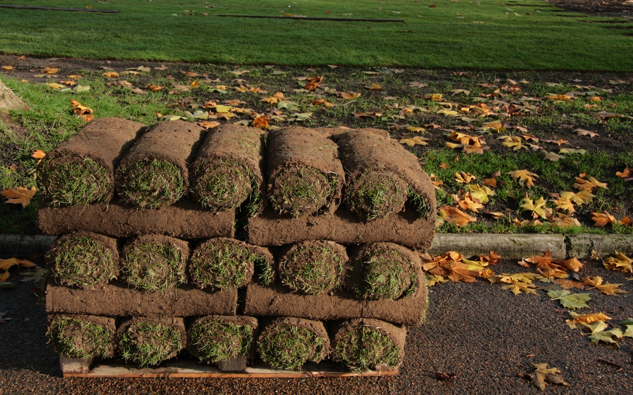 re-sod your lawn due to uncontrollable weeds