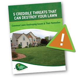 Lawn care threats and remedies for a great looking lawn in Allentown, Bethlehem, or Easton, PA