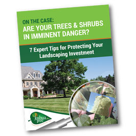 Identifying tree and shrub insect, mite, and disease problems in Allentown, Bethlehem, and Easton, PA