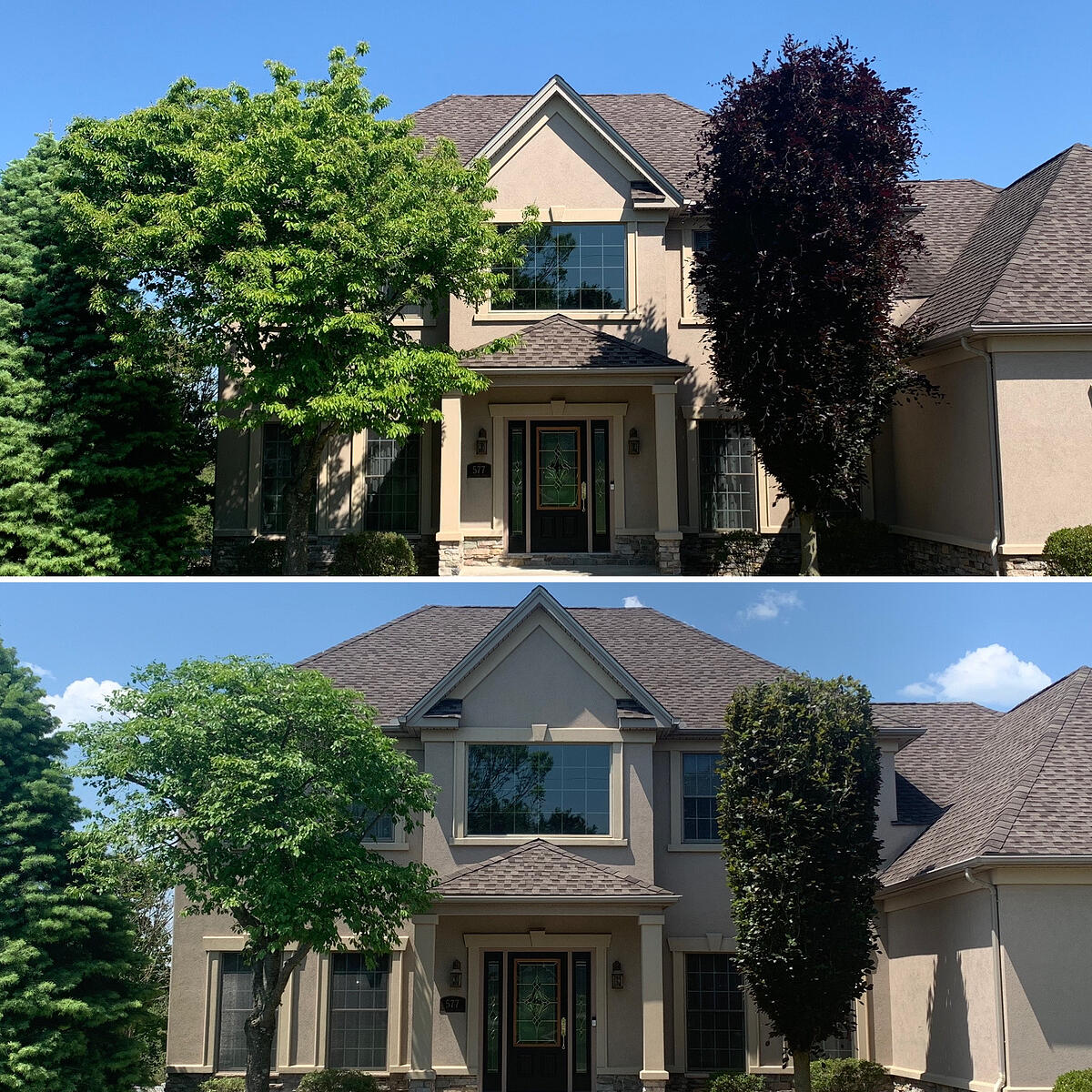 tree pruning before and after in pa