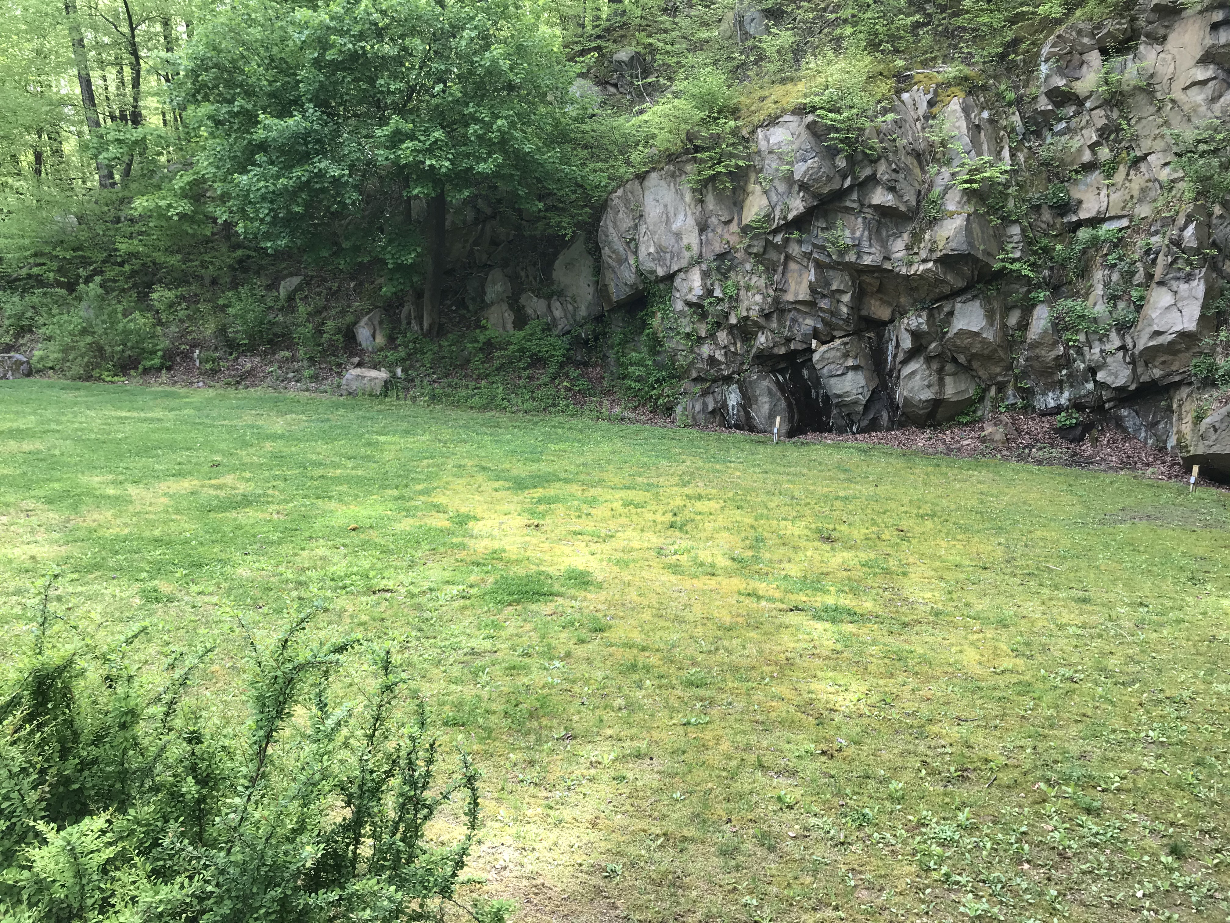 Emmaus, PA before picture of lawn