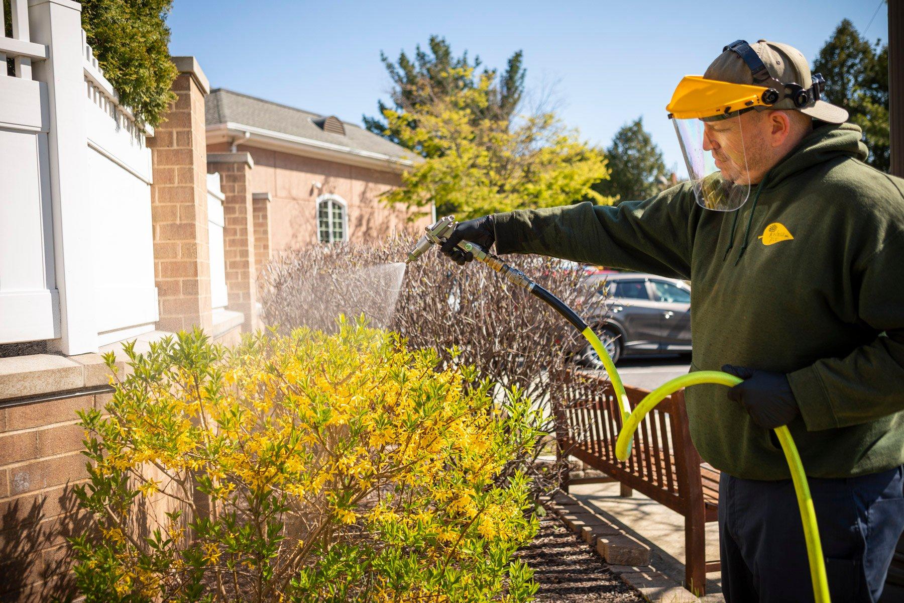 Plant health care technician spraying shrubs