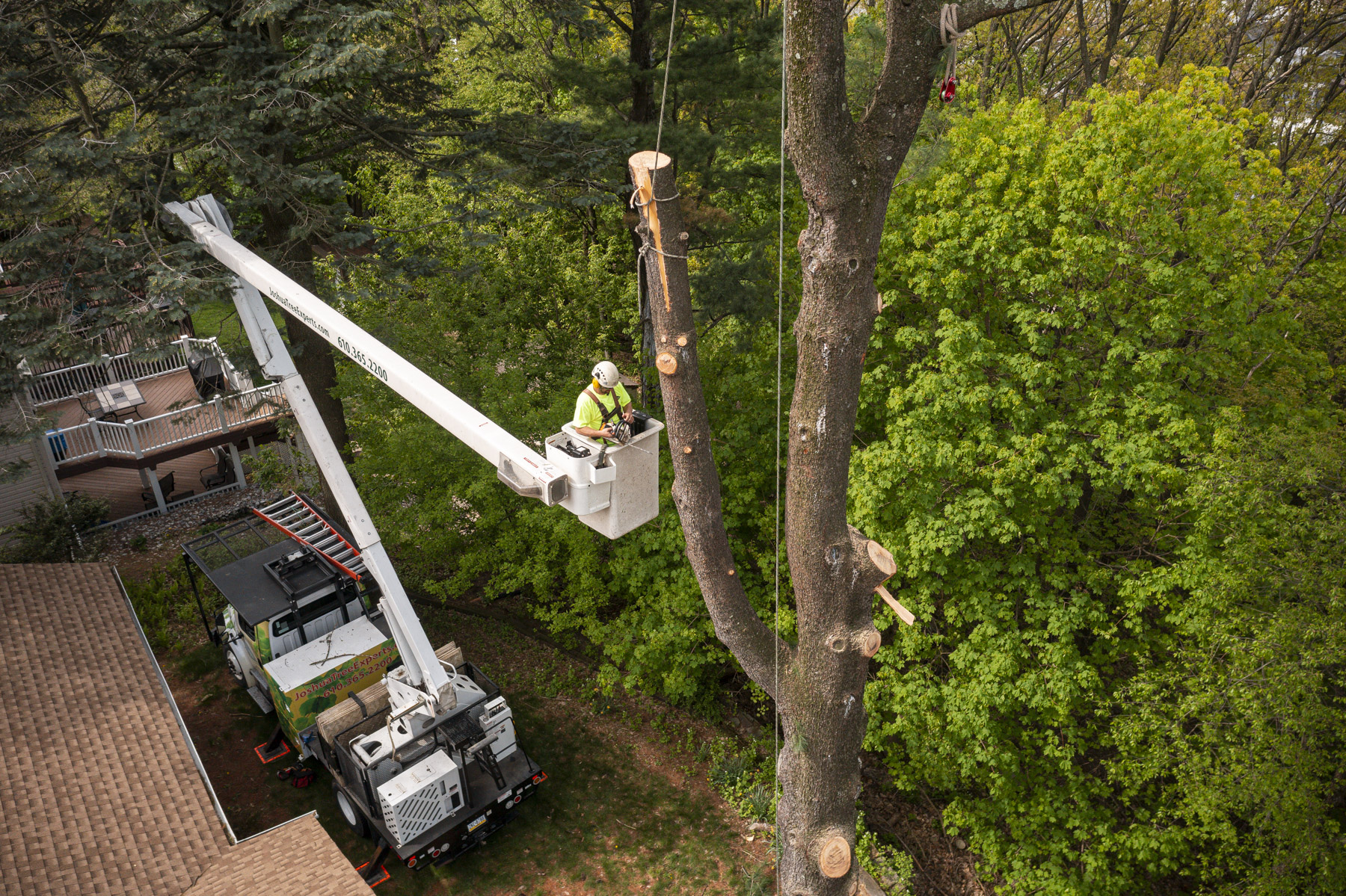 Tree care team removing a tree