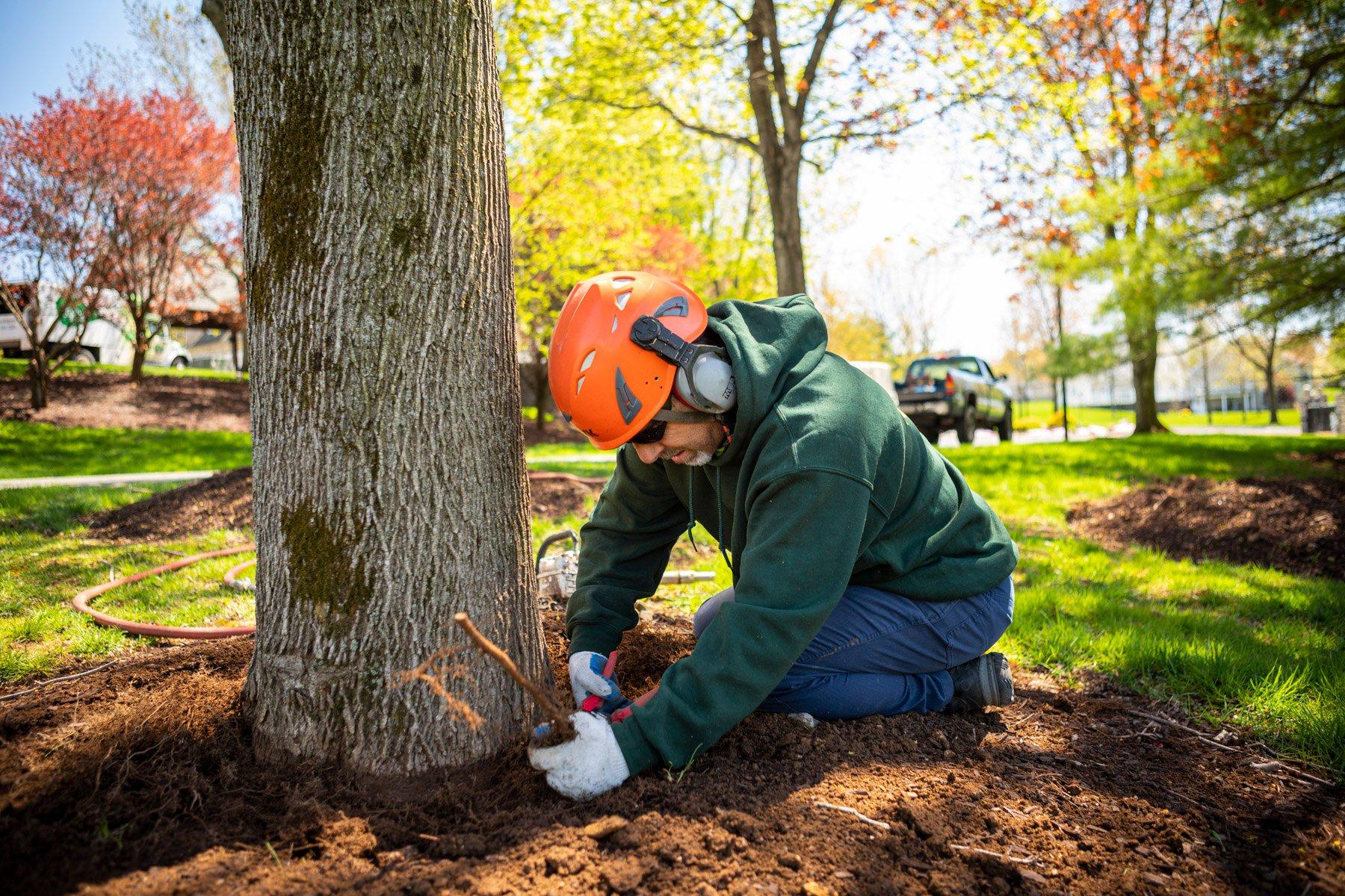 Arborist root pruning
