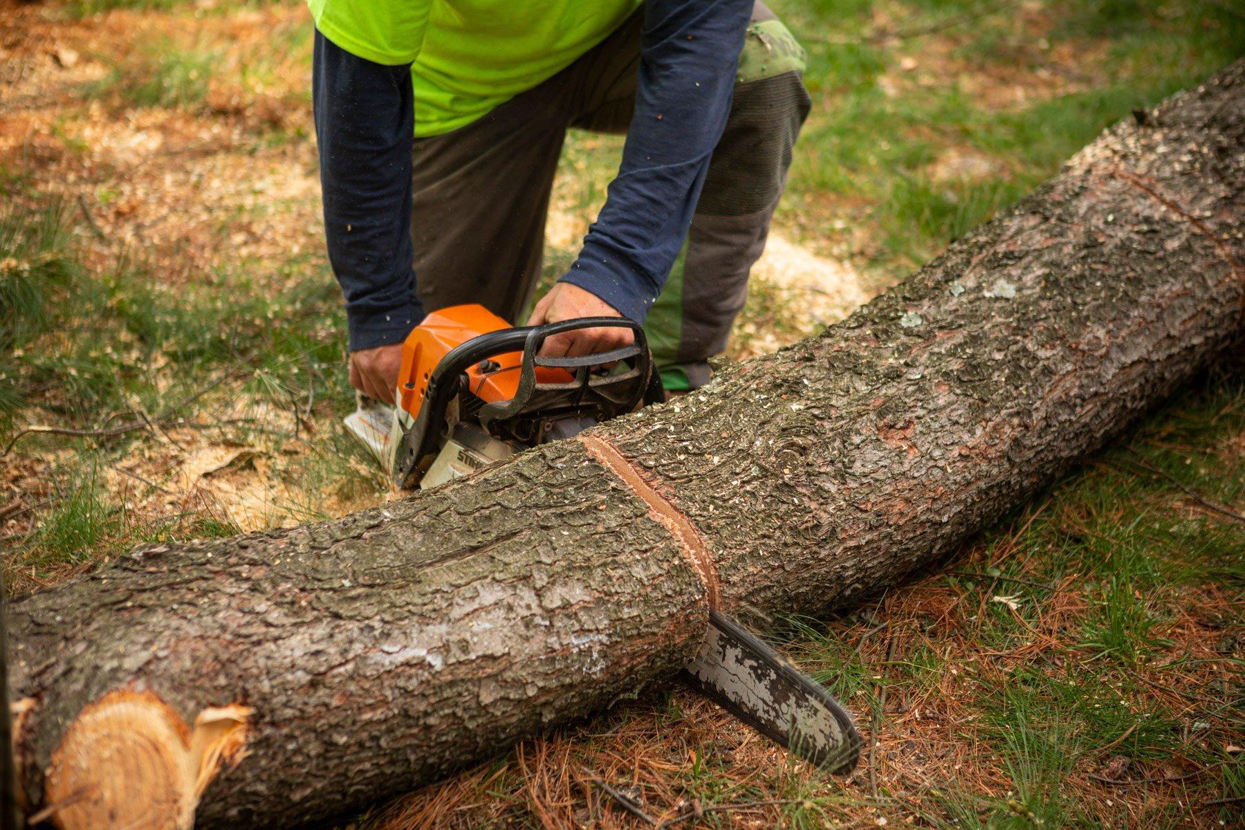 Chainsaw training for arborist