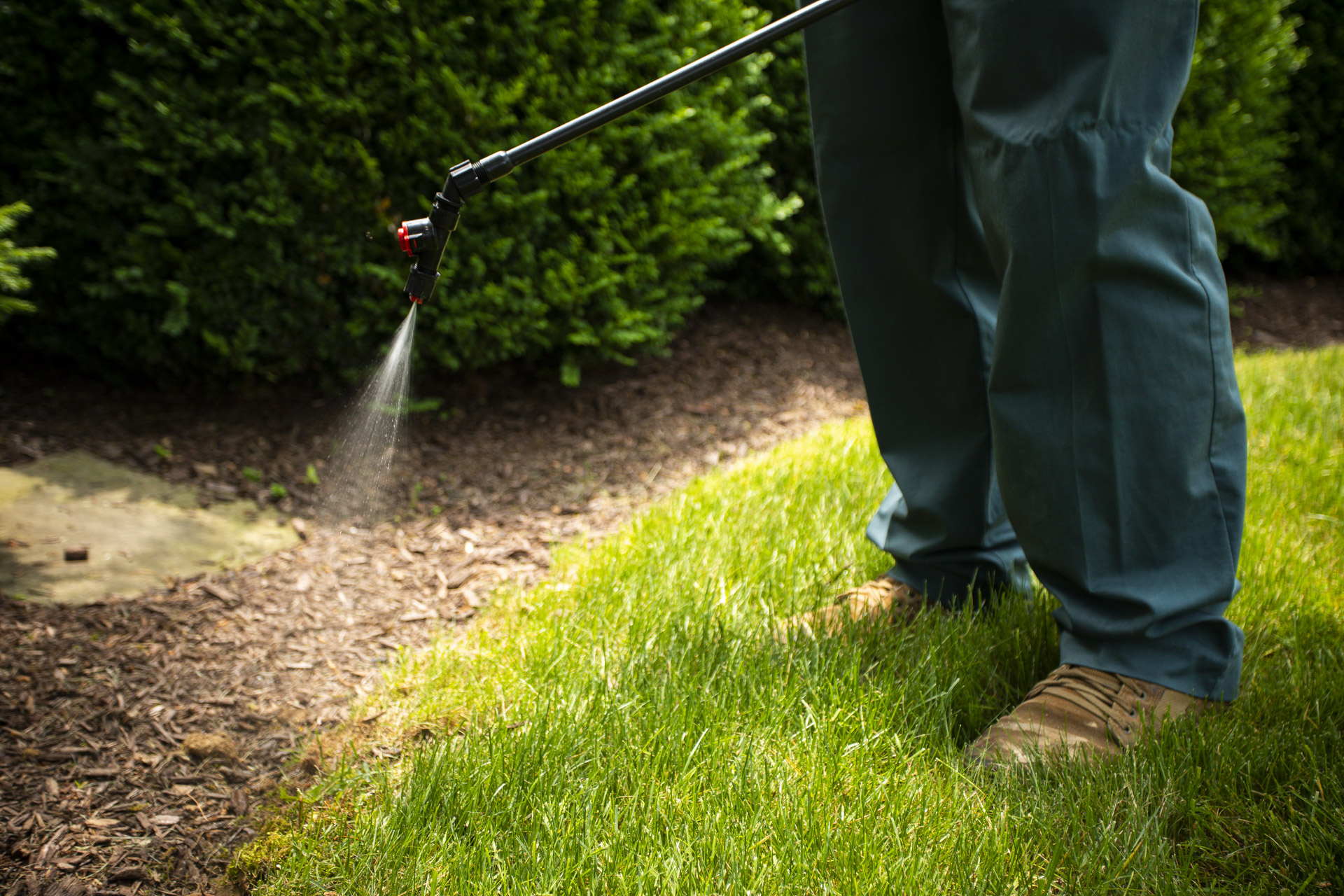 spot-spraying weeds