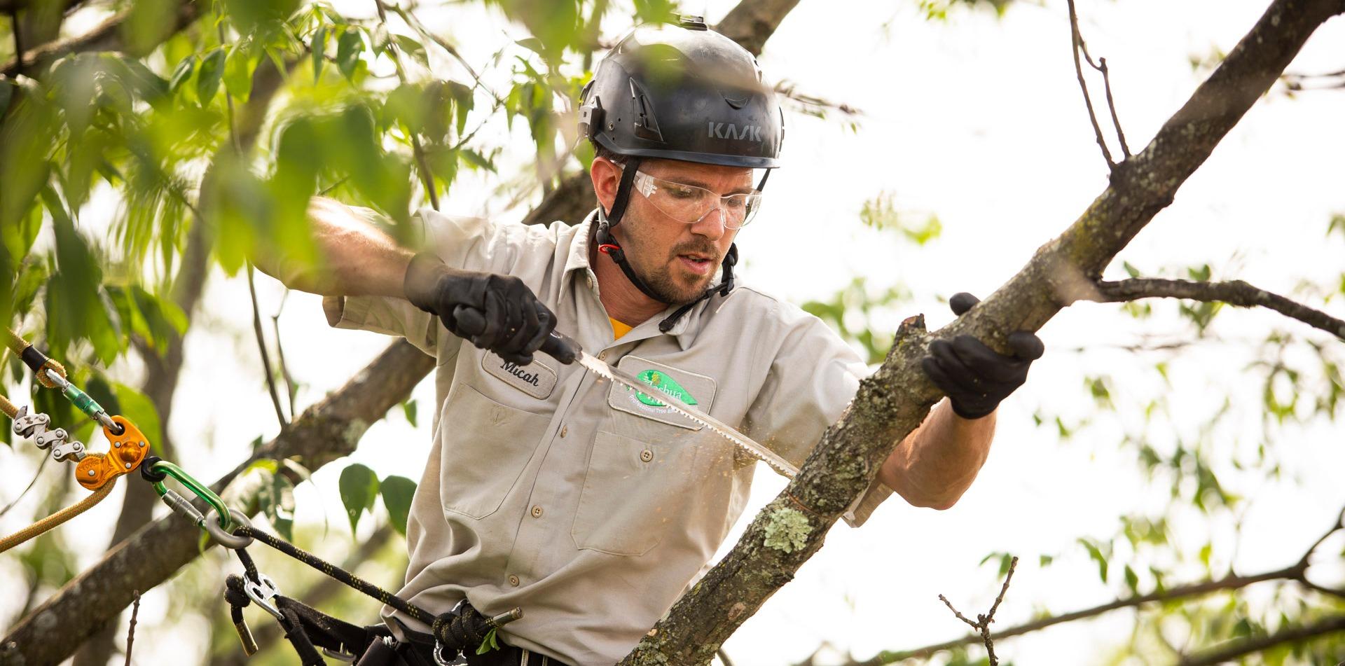 Certified arborists pruning trees