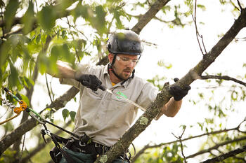 tree pruning and trimming Allentown, Bethlehem, Easton, PA