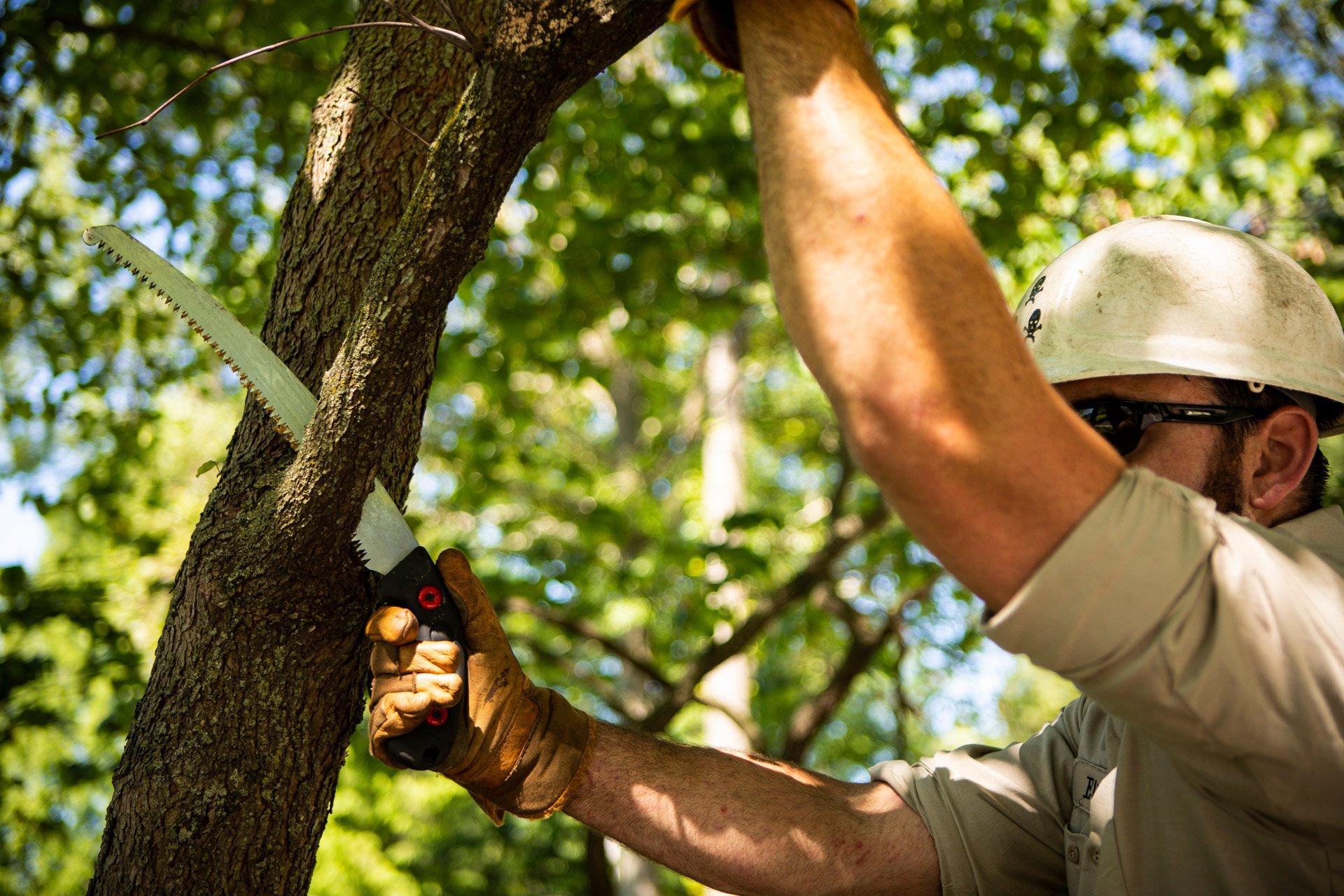 tree pruning specialist