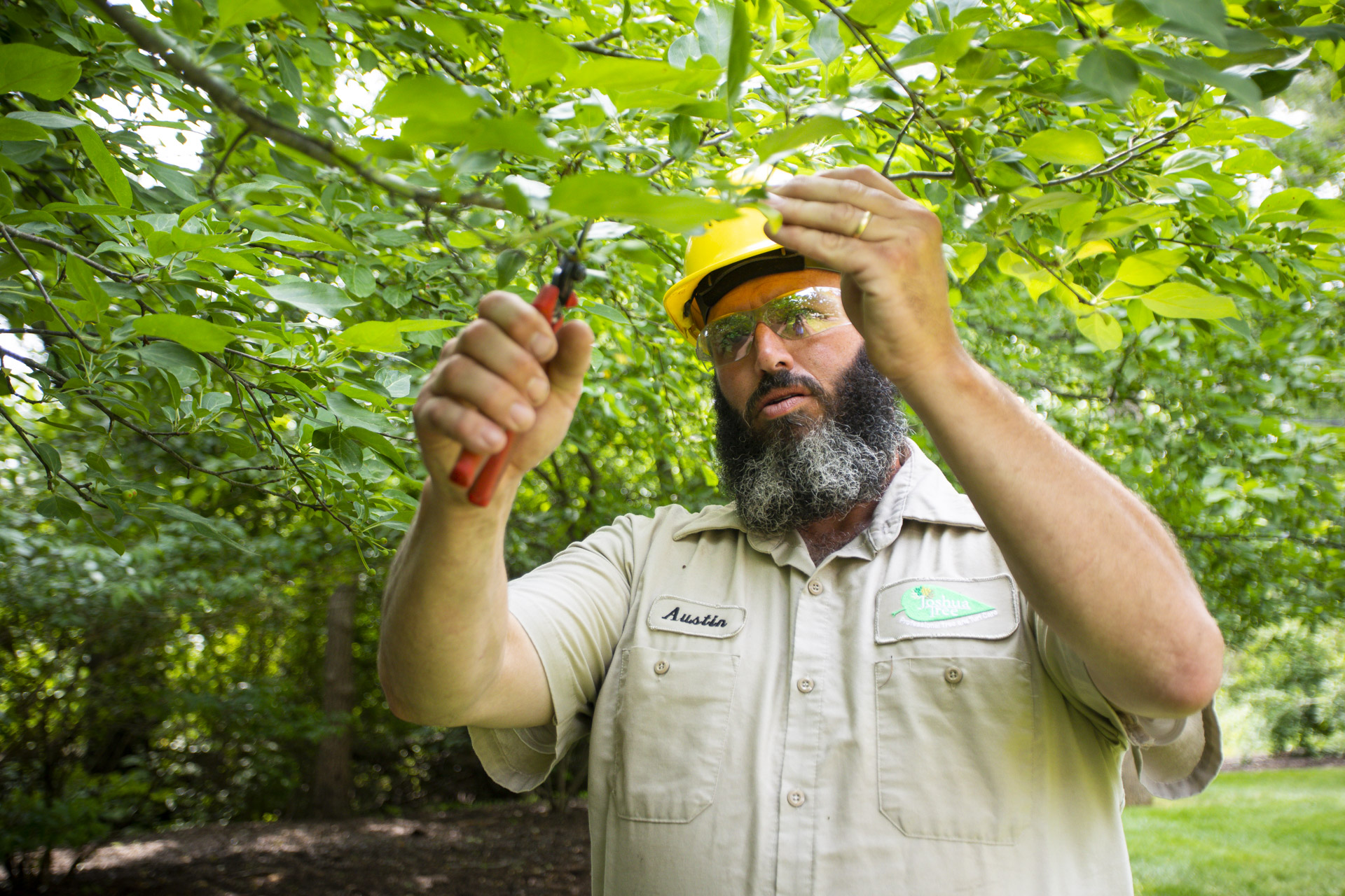 Tree care technician pruning a branch