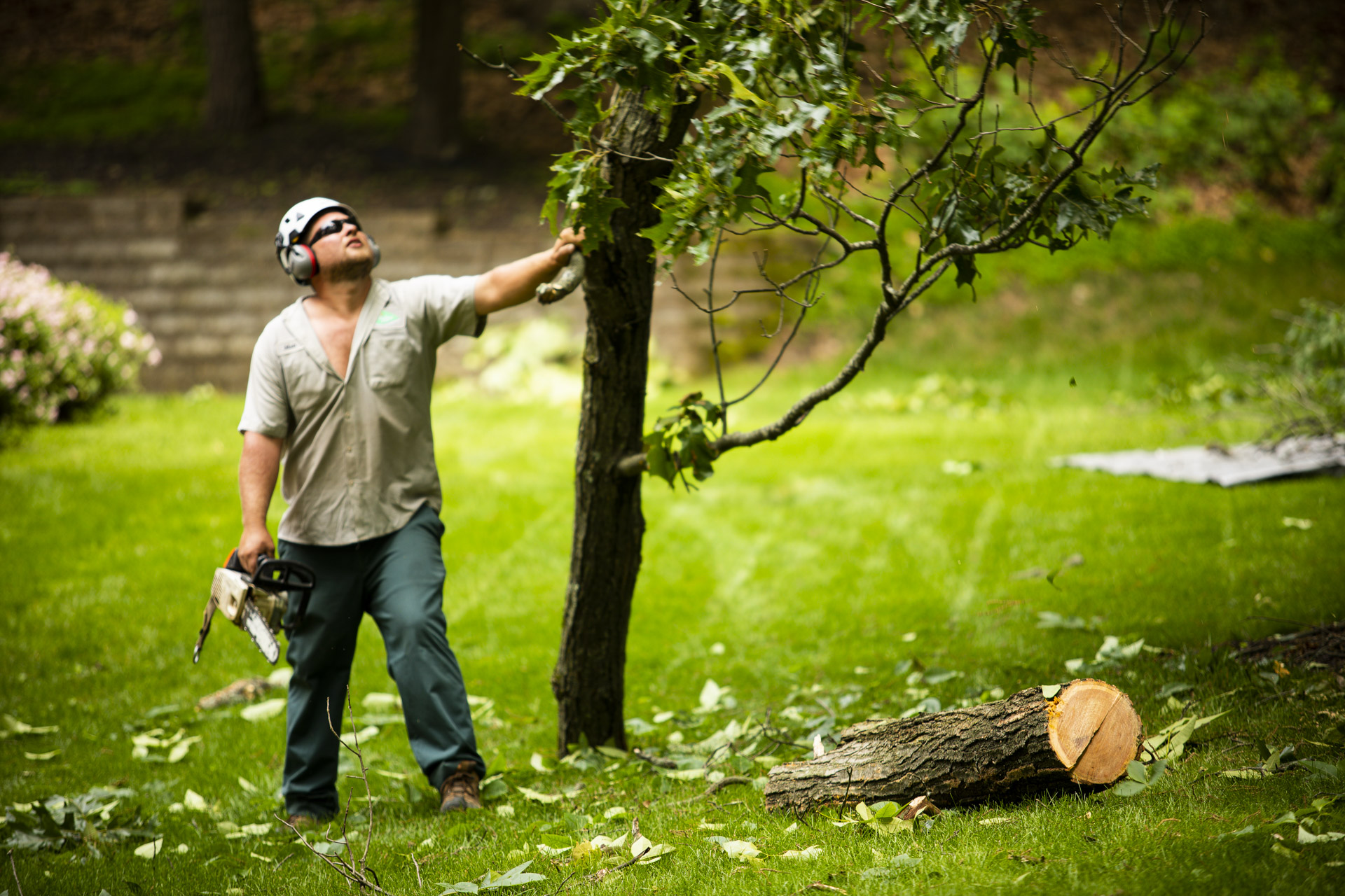 Tree removal in Lansdale, PA