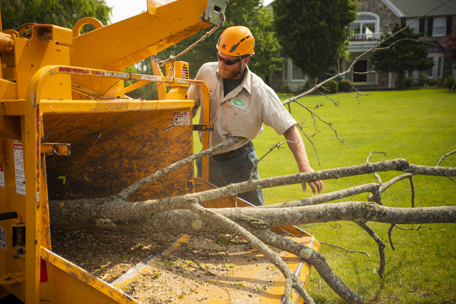 Tree removal technician placing trees in wood chipper