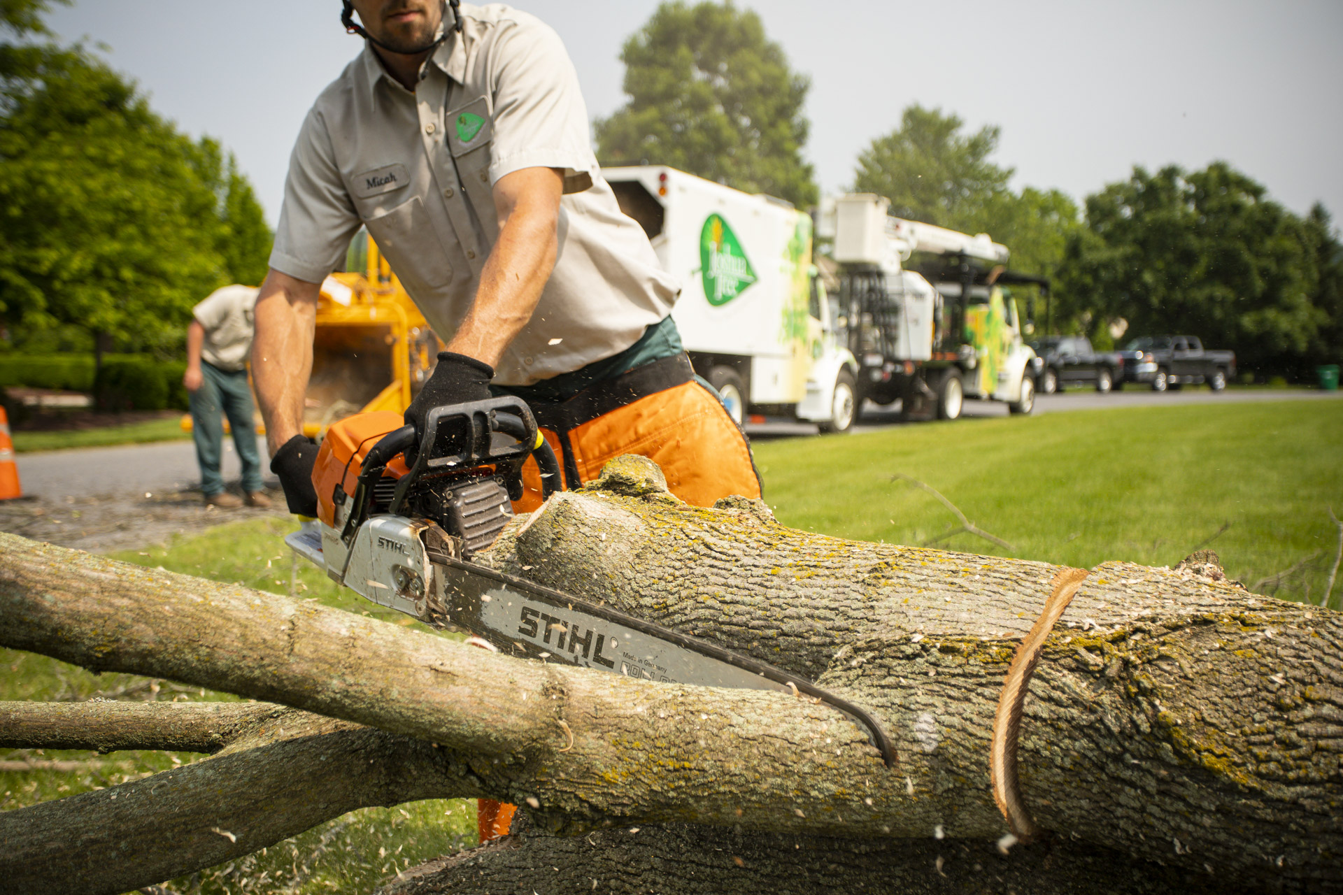 Tree crew cutting and removing a large tree