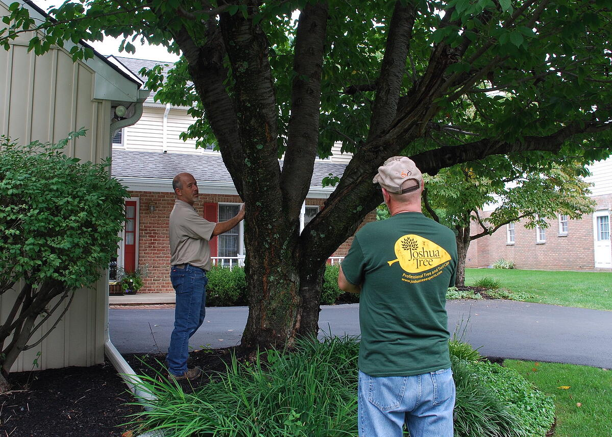 account managers inspect tree at client property