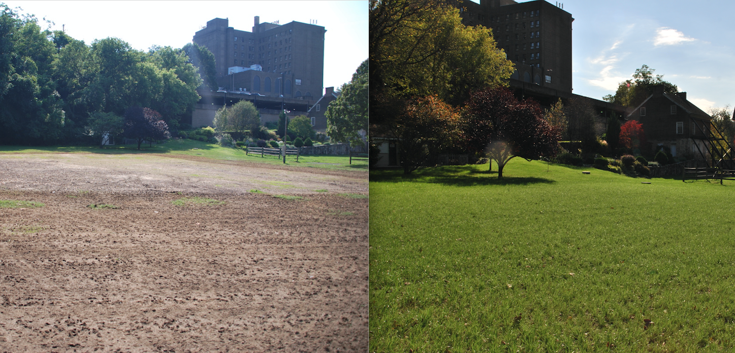 lawn before and after aeration and overseeding
