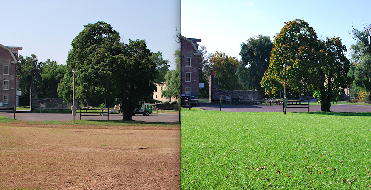Before and after dead lawn and green lawn from aeration and overseeding