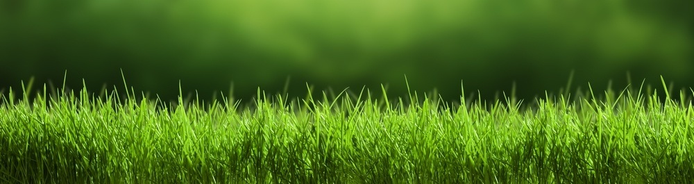 Lawn Care Pricing
