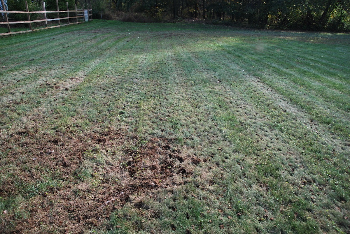 lawn-aeration-after-2
