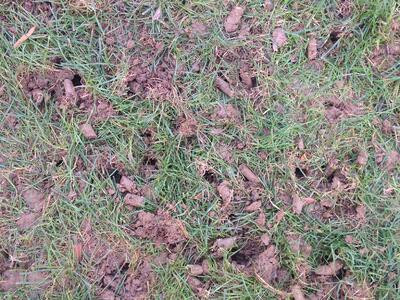 Lawn aeration tips and info on lawn aerating service in Allentown, Bethlehem, Easton, PA.