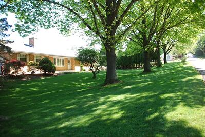 trees causing shade on lawn