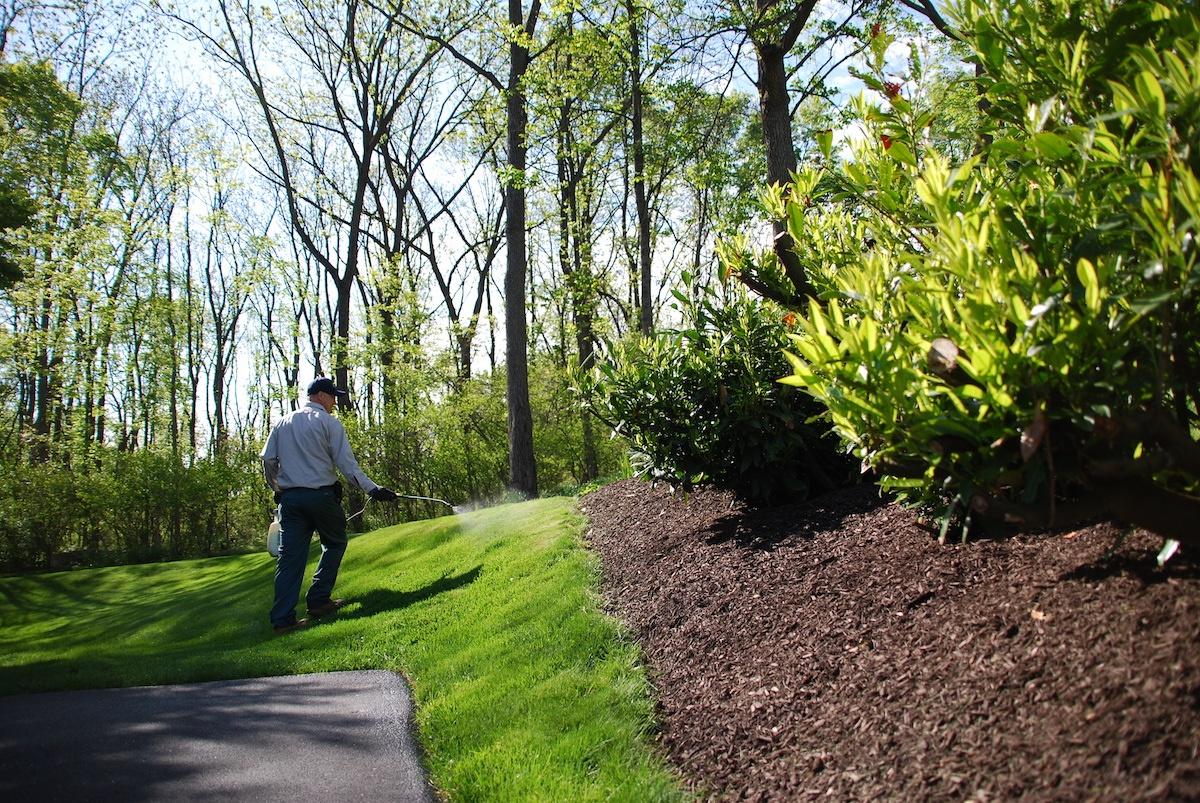 lawn technician killing weeds in lawn