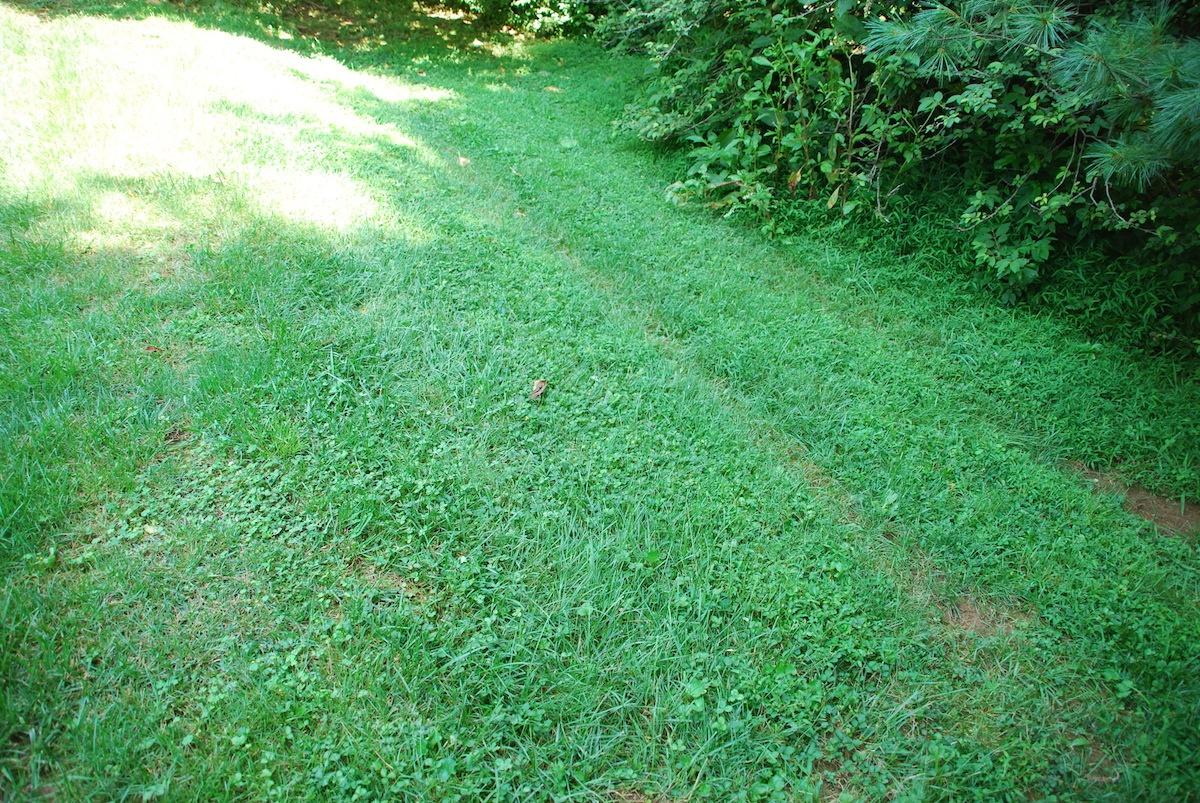 lawn-weeds-2
