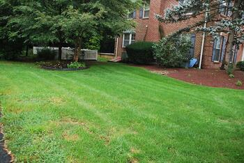 DIY Lawn Care vs. Using a Pro: Costs, Considerations, and Results