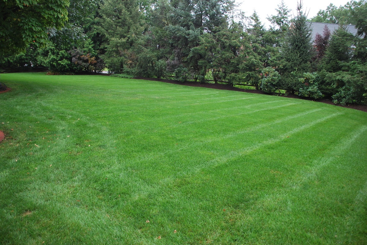 healthy lawn with soil testing