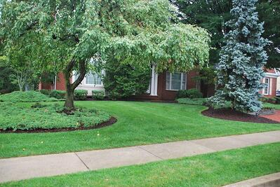 Trees treated by tree services in Allentown, PA