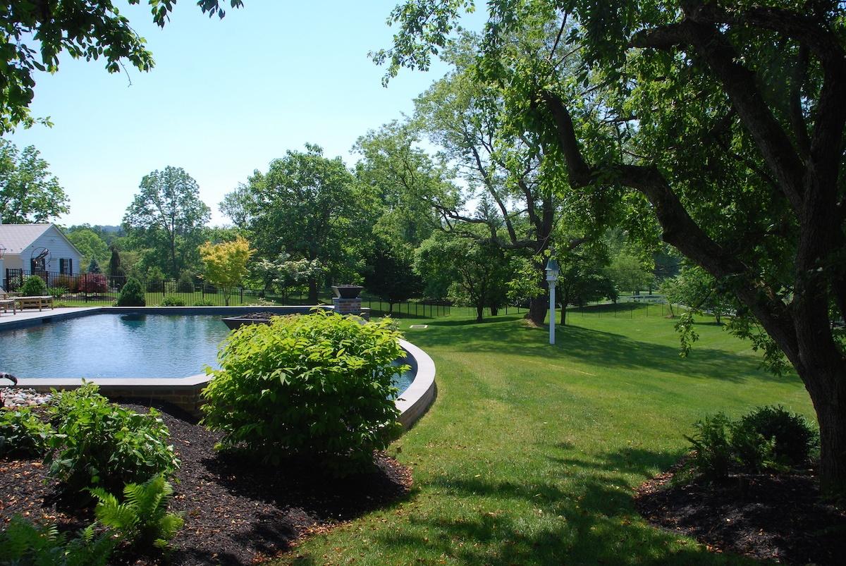 nice-lawn-trees-shrubs-pool-1