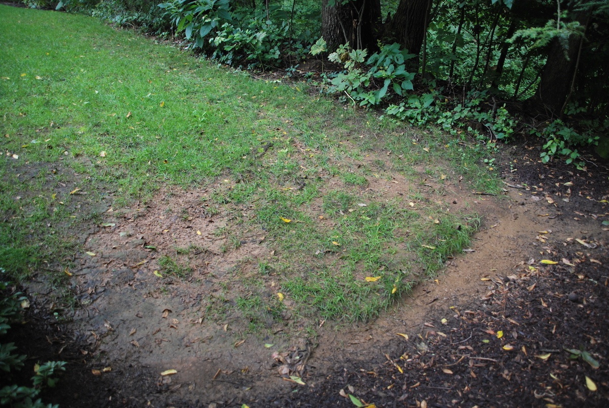 lawn with soil problems