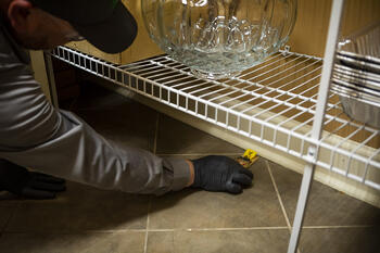Joshua Tree technician setting mouse traps