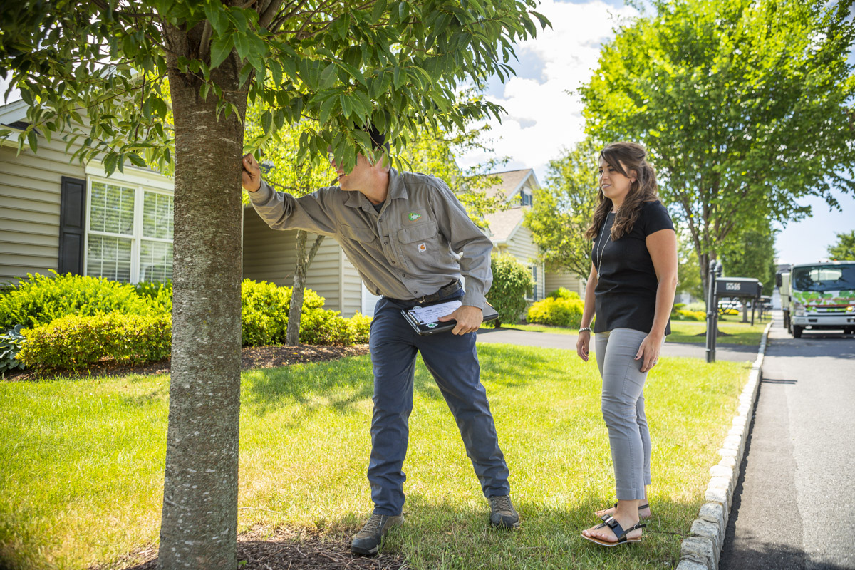 Joshua Tree technician inspecting trees with customer