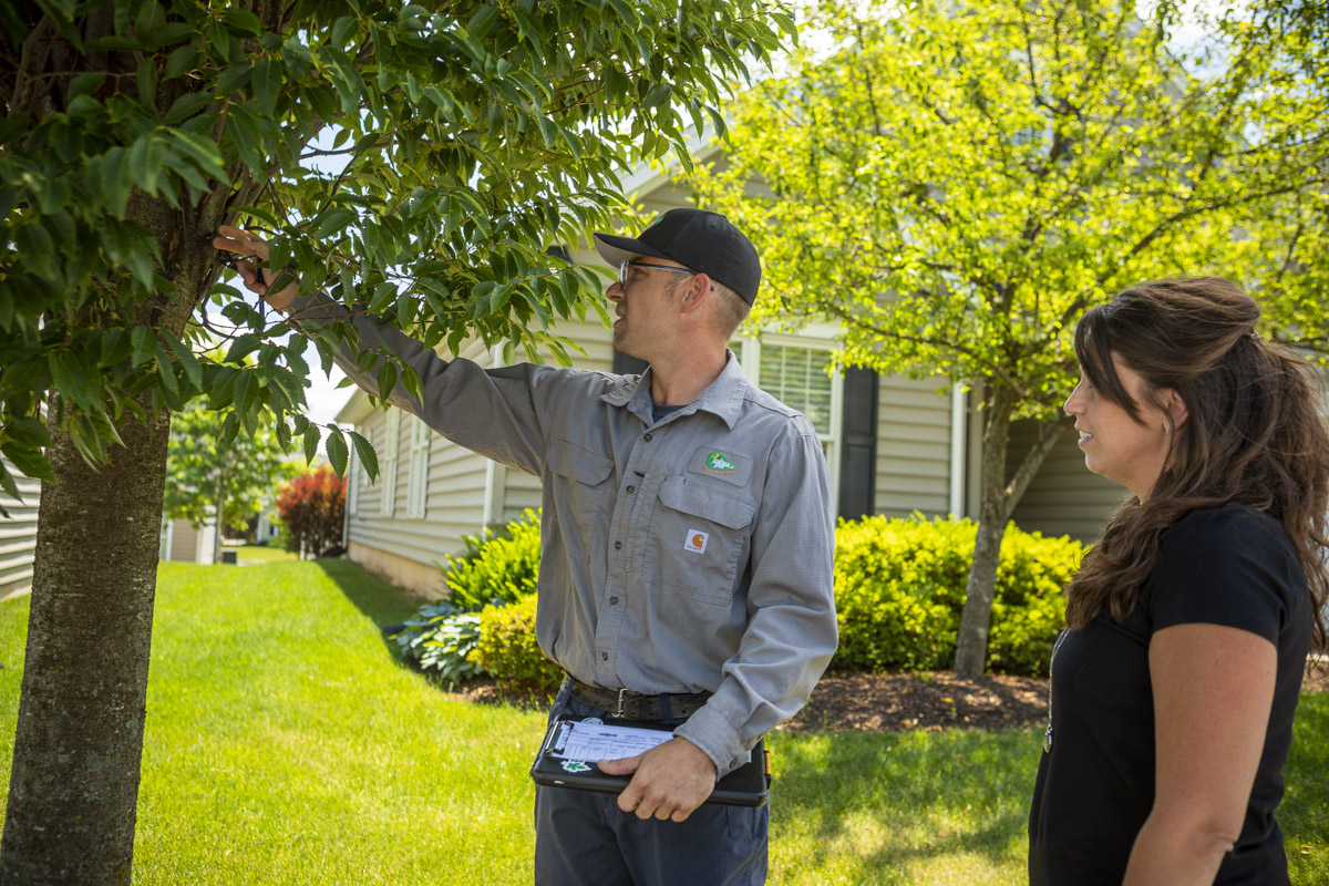 tree expert consults with customer on tree dying symptoms