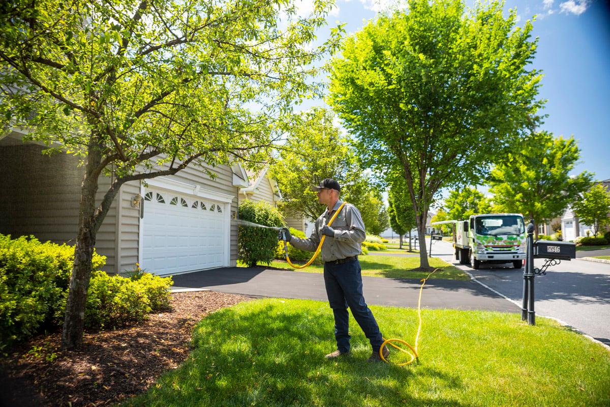 Tree care technician spraying a tree