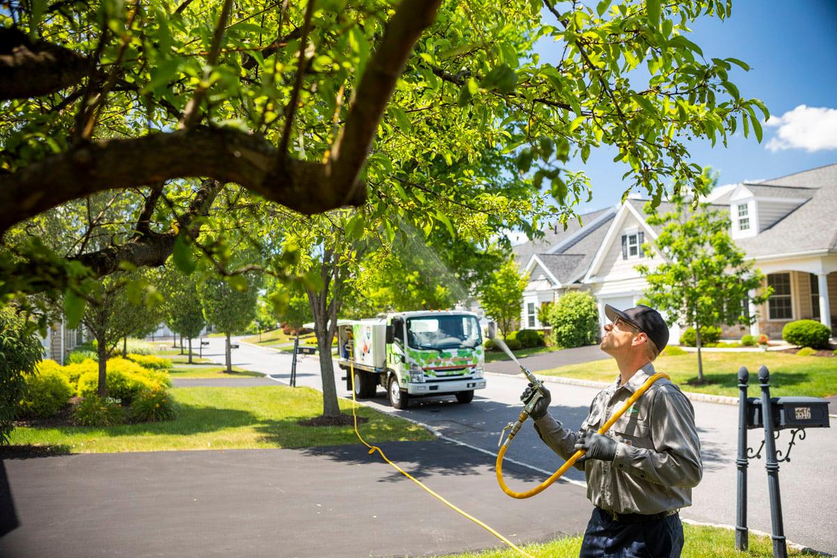 technician tree spraying 5