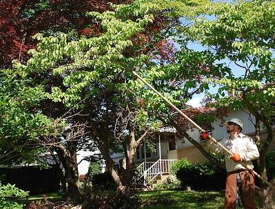 certified Arborist caring for tree in Pennsylvania