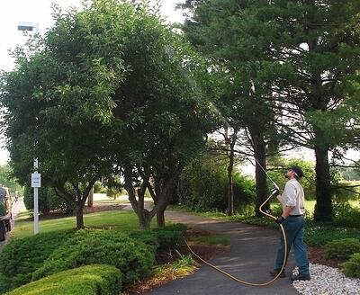 Tree insect control services in Allentown, Bethlehem, and Easton, PA