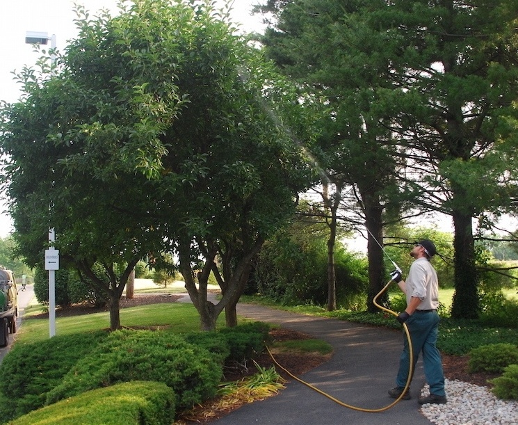 Joshua Tree disease control spraying