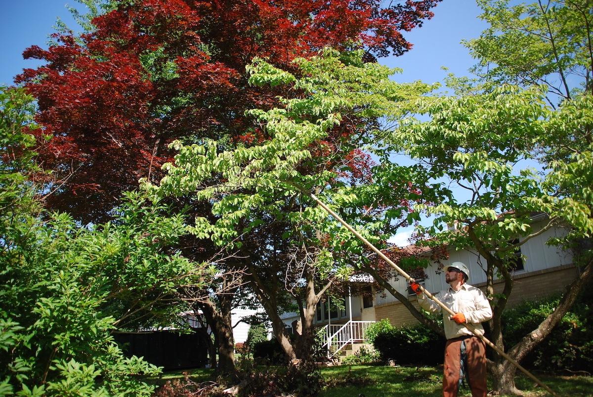 tree pruning technician