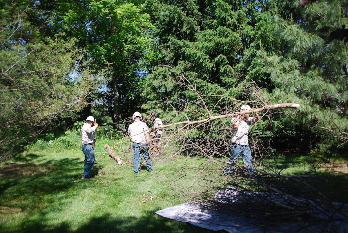 professional tree removal technicians removing tree after storm