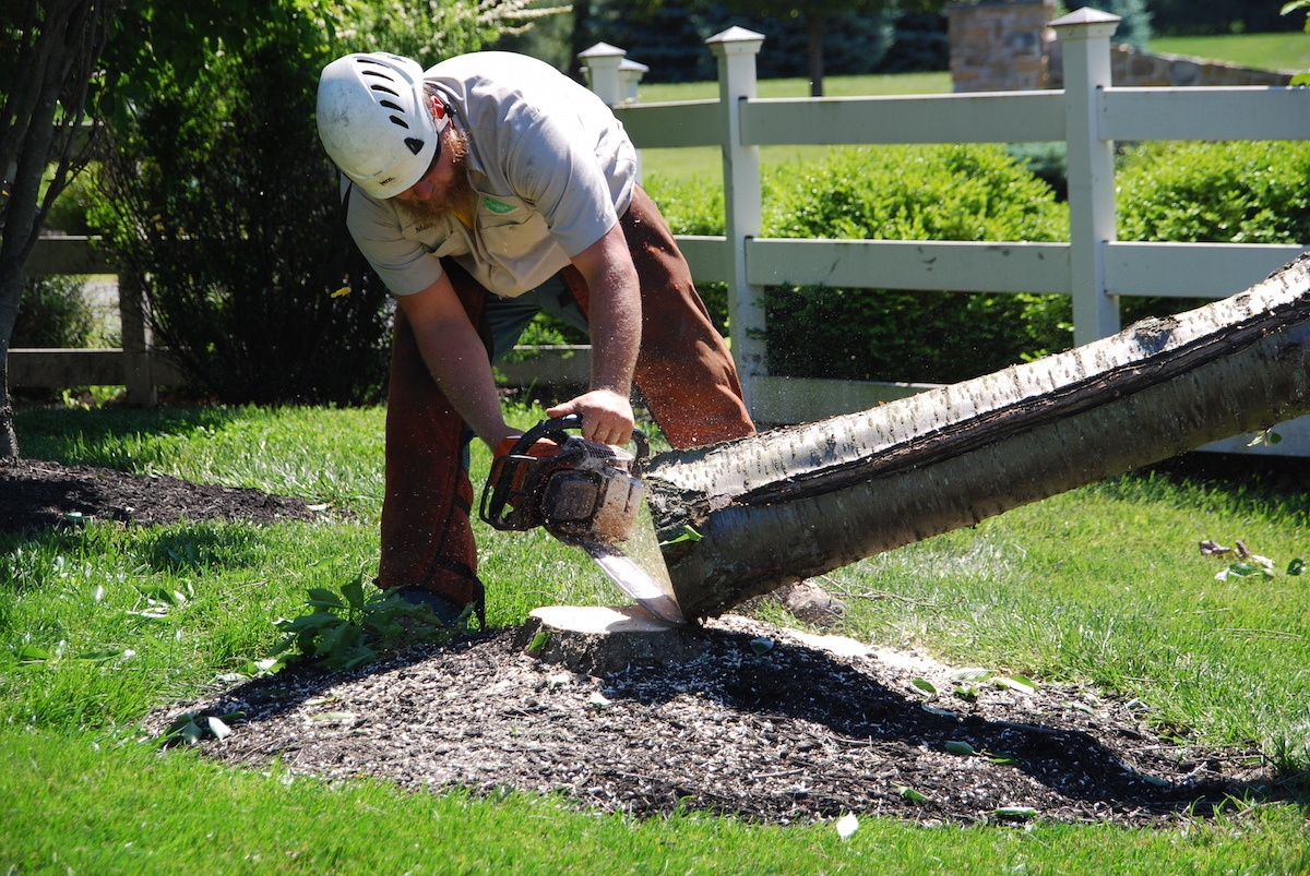 Tree removal services in Allentown, Bethlehem, and Easton, PA