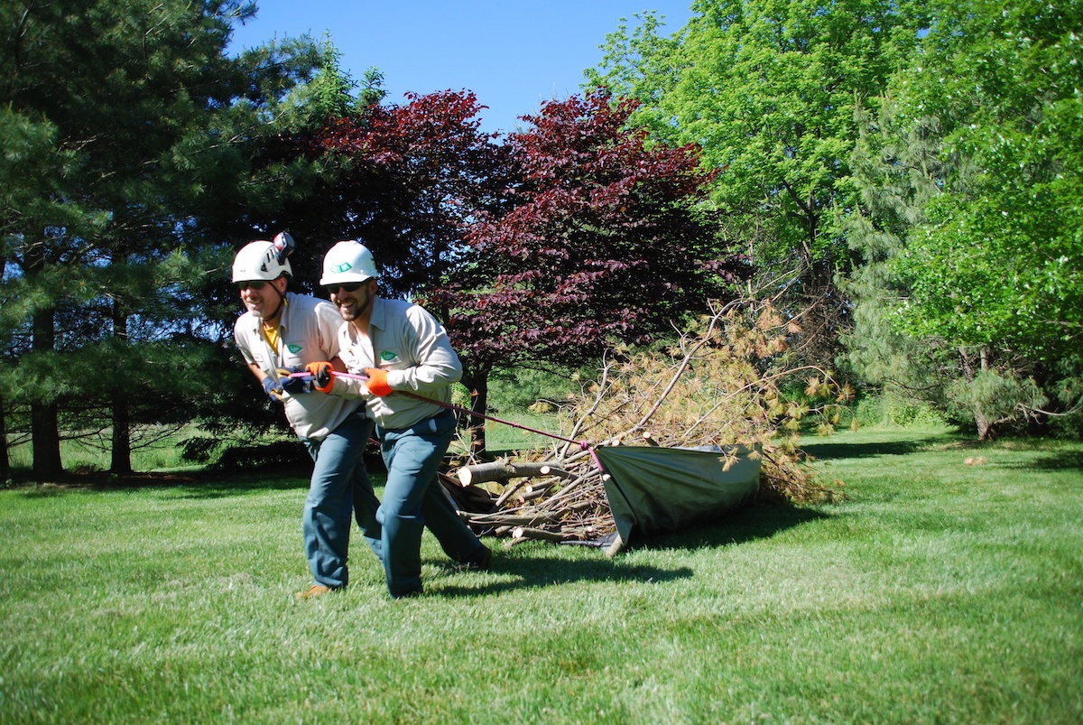tree-removal-dragging-3